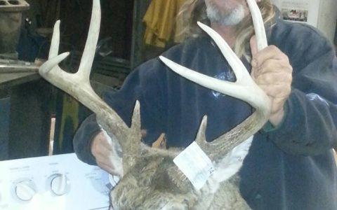 Iowa Deer 14